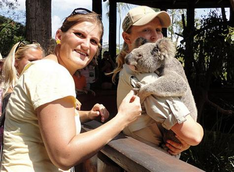 Koalas' popularity in Australia