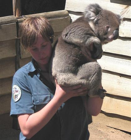 Koala held by an Australian School Kid
