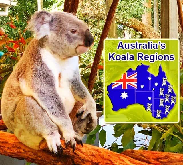 Australia S Koala Regions