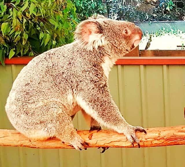 Australia's Koala Regions