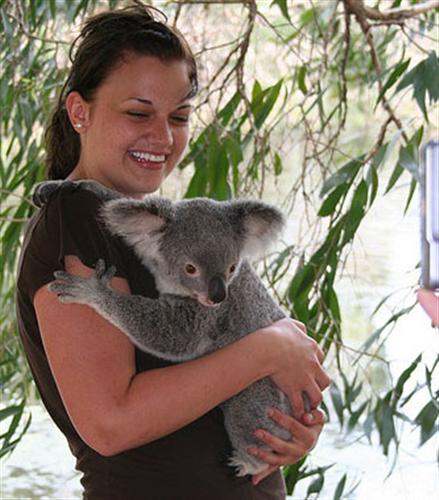 Young Koalas' Chewing Ability is better.
