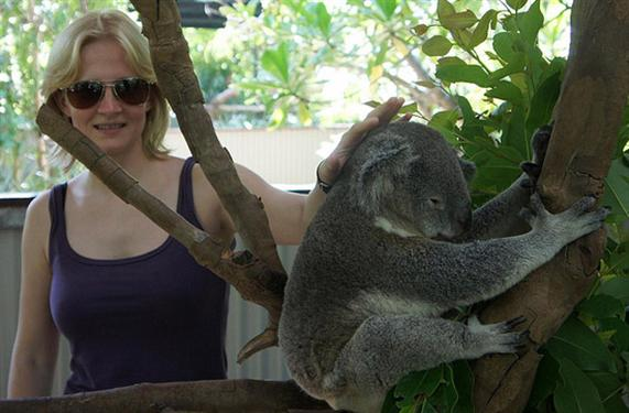 Koalas popularity as Australia's national Animal