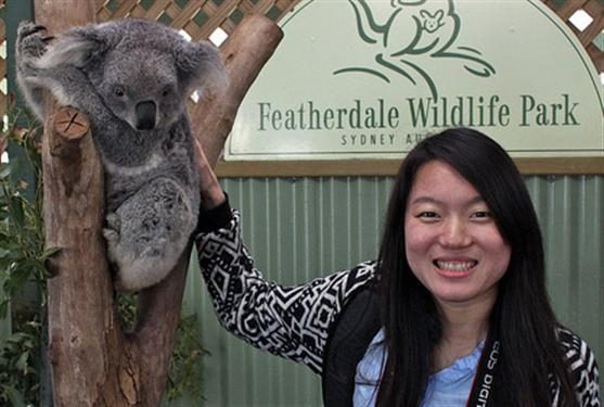 Koalas are popular among tourists.